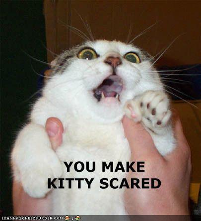 Funny-pictures-cat-is-scared