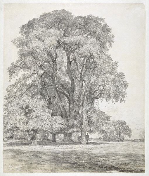 Constable-drawing-ElmTrees