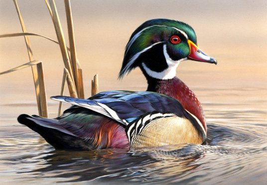 WoodDuckStamp